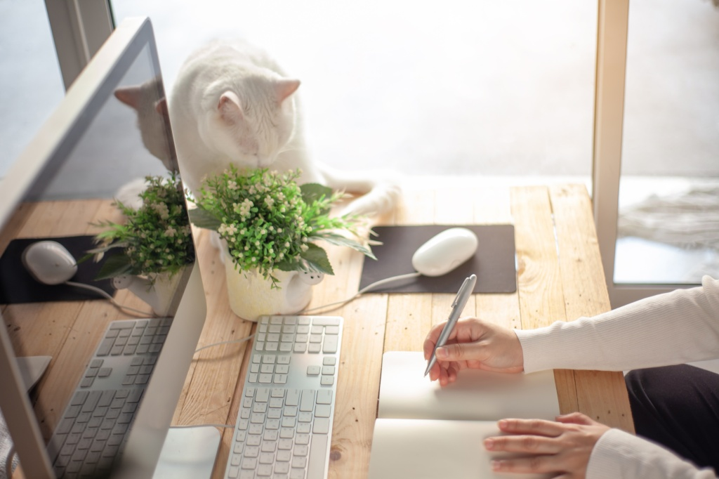 Woman writing and preparing EWA workshop on brand voice copywriting, user experience, SEO copy, next to cute white cat.